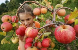 best apple picking near los angeles 171 cbs los angeles