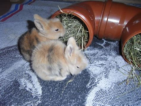 wann sind kaninchen ausgewachsen wann nest entfernen kaninchen