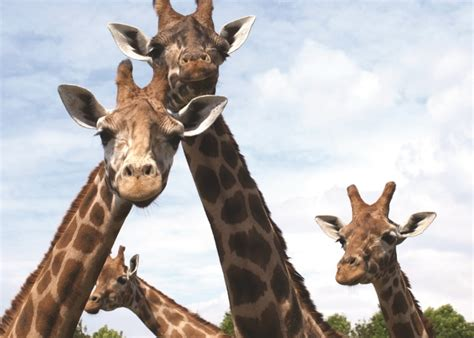 discount voucher paradise wildlife park places to go across the uk lets go with the children