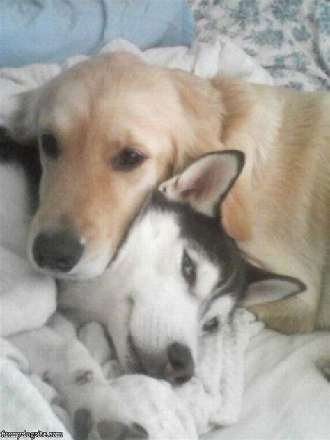 hugging dogs cat hugging cat hugging breeds picture