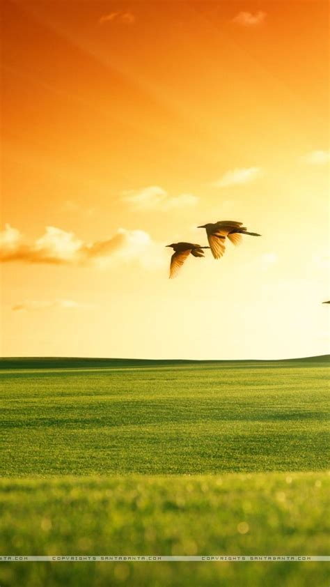 nature independence day wallpaper