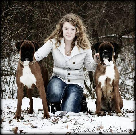 brindle boxer puppies for sale near me best 25 boxer puppies for sale ideas on boxer dogs for sale boxer pups