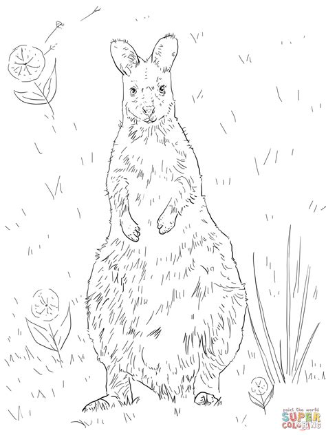 wallaby coloring page printable red necked wallaby coloring page free printable coloring
