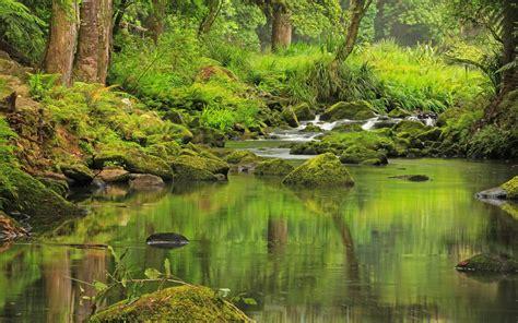 nature  zealand mountain river rocks  moss green vegetation trees wallpaperscom
