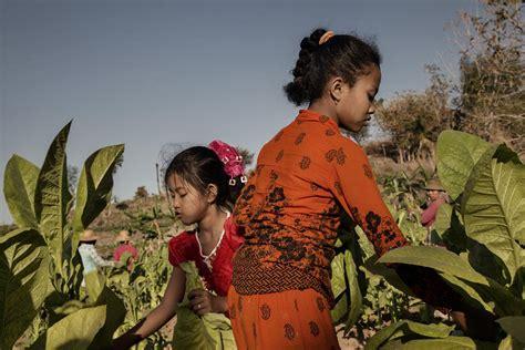 Shoo Dove Di Indo indonesia dove i bambini si ammalano per raccogliere