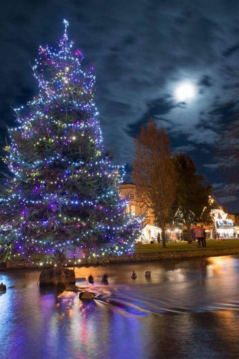 xmas tree hsitory in britain tree in the river bourton on the water smiles trees