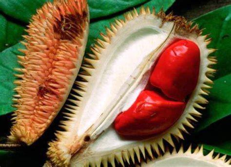 S Sarung Tangan Bayi Ag Isi 2 Buah Berkualitas pernah tengok durian merah 5 gambar abg cek ada sekadar memberi pendapat