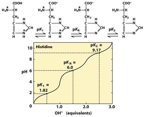 Histidine Protonation by Pka Pi Values Amino Acids
