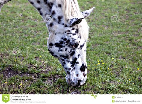 white with black spots beautiful white with black spots stock photo image 21645670