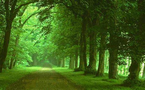 imagenes de paisajes verdes para pantalla fondo escritorio paisaje camino verde