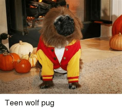 wolf pug wolf memes of 2017 on sizzle