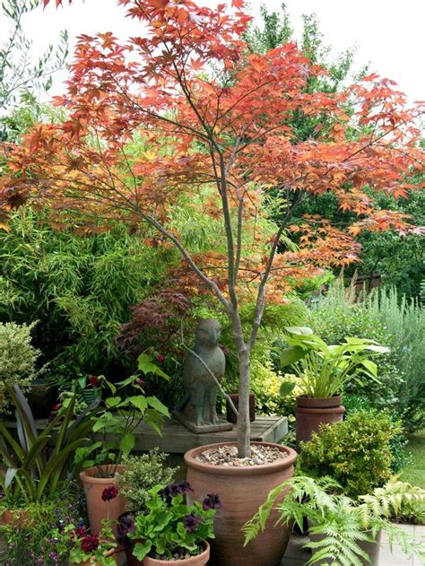 good shade trees for backyard the 25 best small trees ideas on pinterest flowering