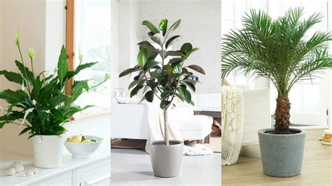 best 10 air purifying plants with nasa ratings blog best 10 air purifying plants with nasa ratings youtube