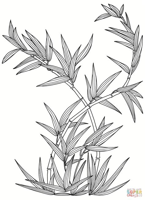bamboo tree coloring page bamboo coloring page az coloring pages
