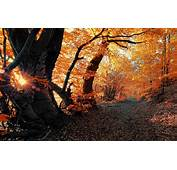 Wallpaper Autumn Forest Leaves Rays Trees Nature