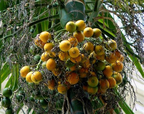 what is the fruit of the tree of the of fruit s trees xcitefun net