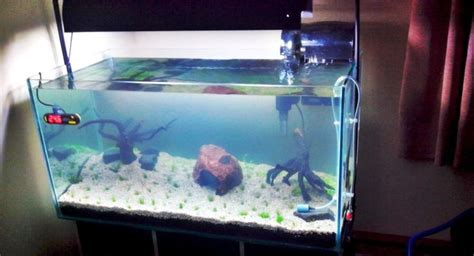 membuat filter aquarium laut alat dan bahan pembuatan aquascape taman air aquascape