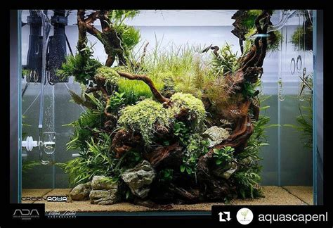 nature aquariums and aquascaping inspiration freshwater aquascape ideas 28 images aquarium