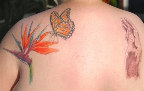 paradise tattoo key west original bird of paradise flower and butterfly drwn