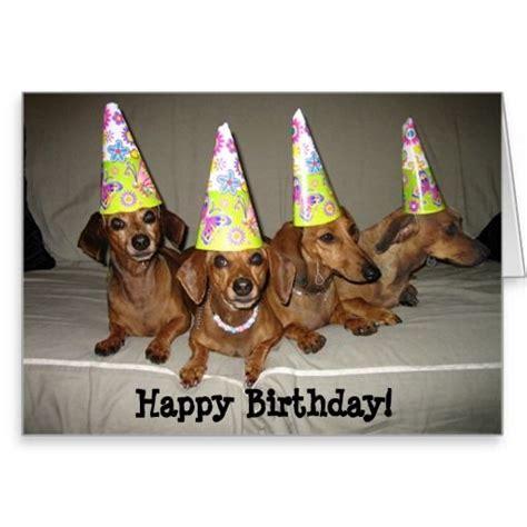 Dachshund Birthday Meme - dachshund birthday meme google search birthday cards