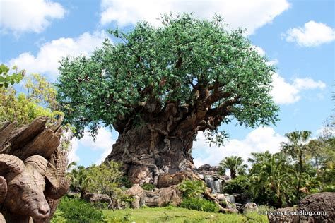 tree of life animal kingdom tree of life www imgkid com the image kid has it