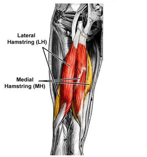 hamstring muscles diagram uncategorized hamstring treatment