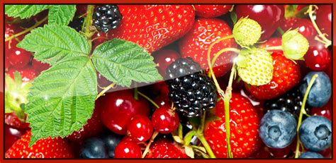 amazon berries amazon com berries hd live wallpaper appstore for android