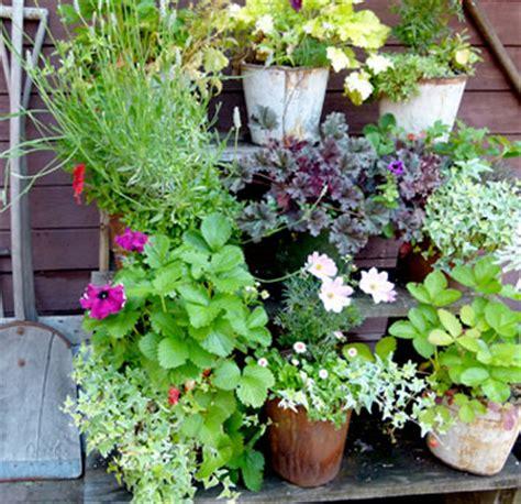 giardino in vaso realizziamo un giardino in vaso sul balcone sul terrazzo