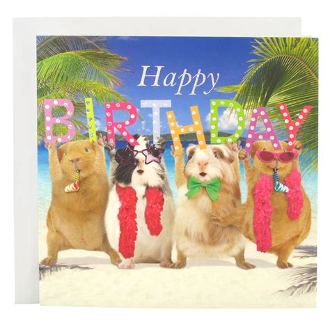Happy Birthday Guinea Pig Card Pin By Abbygayle Martin On Guinea Piggies Pinterest