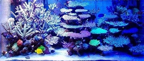 Marine Aquarium Aquascaping by Beautiful Coral Reef Aquarium Aquarium Hobbyist