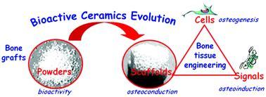 ceramic bone graft bioactive ceramics from bone grafts to tissue engineering