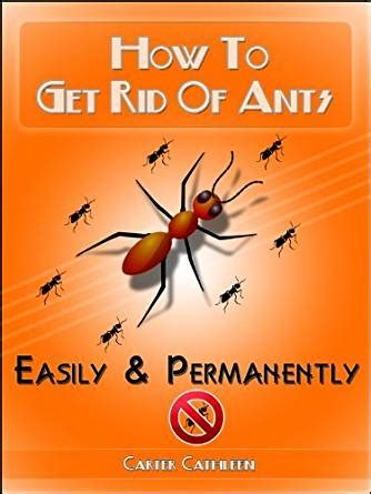 how to get rid of ants effective methods of how to get