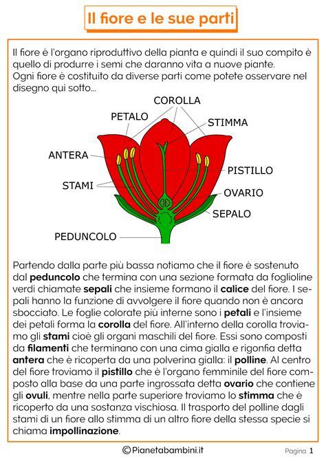 le parti fiore scuola primaria le parti fiore schede didattiche per la scuola