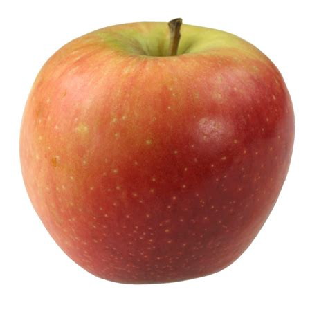 A Apple by Image Gallery Single Apple