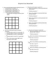 Chapter 6 Dihybrid Cross Worksheet Answer Key by Cpe Dihybrid Cross Dihybrid Cross Worksheet 1 Set Up A