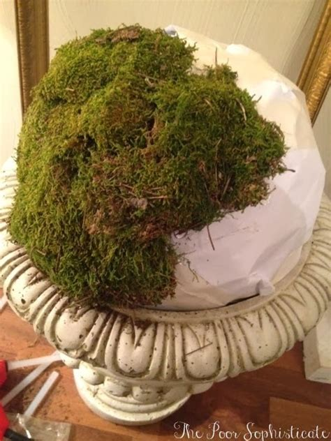topiary diy the poor sophisticate diy moss topiary