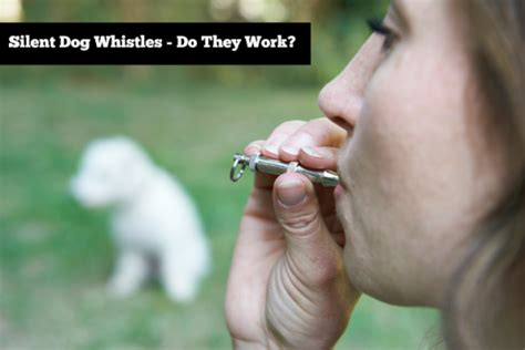 do whistles work silent whistles do they work slimdoggy