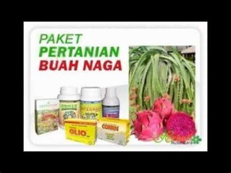 Jual Pupuk Npk Mutiara 081290990946 jual pupuk npk mutiara di samarinda