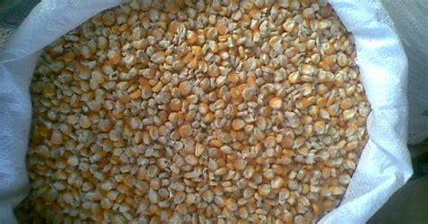 Pakan Walet Dedak toko sumber rahmat jagung besar