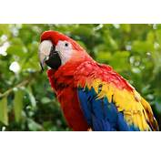 About Parrots Of The World  516 764 0717