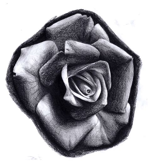realistic rose by billcmf on deviantart