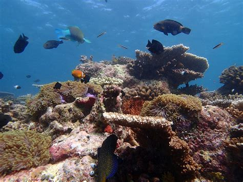 cairns glass bottom boat reef tours great barrier reef tour cairns free scuba free glass