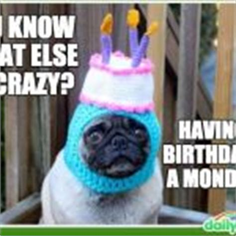 Birthday Pug Meme - happy birthday pug meme my blog