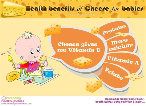 Is Cottage Cheese For Babies by Can I Give Cheese To Infant