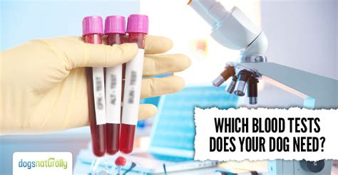 Does Detox Work For Lab Tests by What Blood Tests Does Your Need Dogs Naturally Magazine