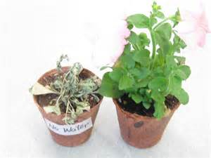 which plants can survive without sunlight plant experiment 3 can plants live without water mrs