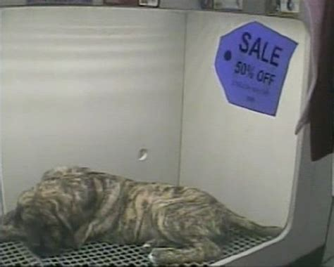 petland puppy prices