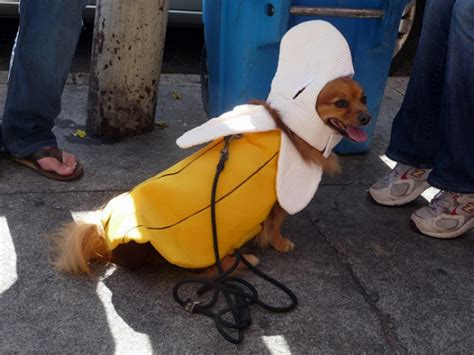 halloween costume ideas  dogs  cats clever