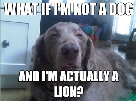 Memes About Dogs - funny dog memes 50 pics