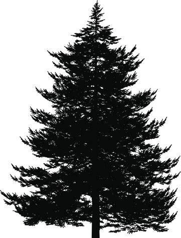 Evergreen Tree Clip by Evergreen Tree Clip Vector Images Illustrations